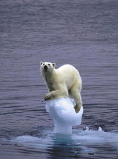 Image result for ice-free arctic
