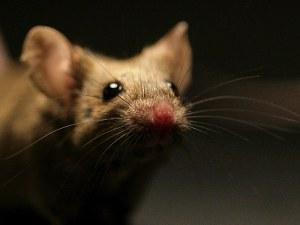 sn-mice