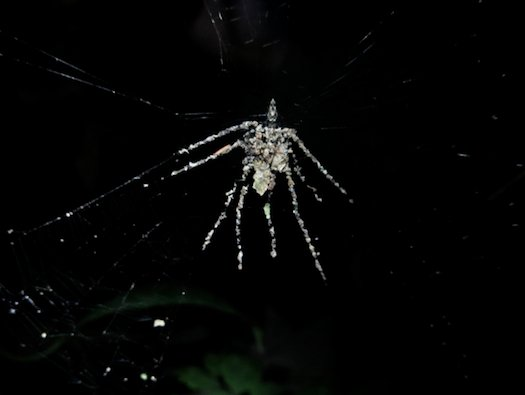spiderfake