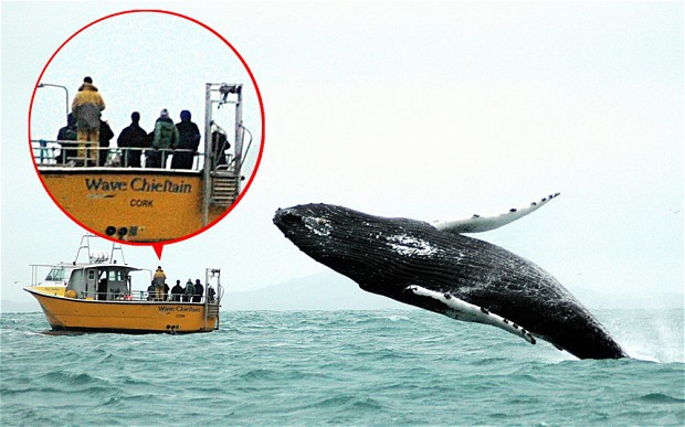whale_2416552b