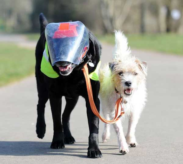 blind_dog