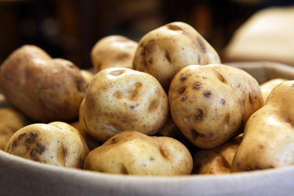irish-famine-potatoes-brought-back-taters_65301_600x450