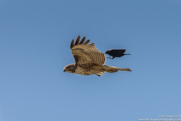 Landing On A Raptor
