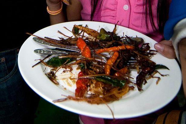 eat-bugs
