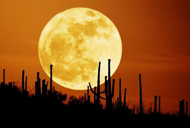 saguaroMoon_seip