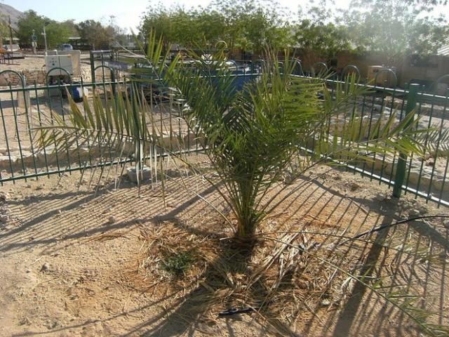 extinct ttree
