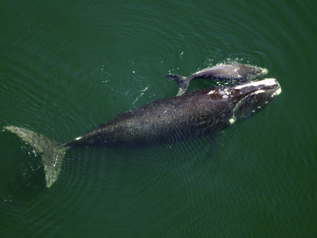 CNSPhoto-WHALES