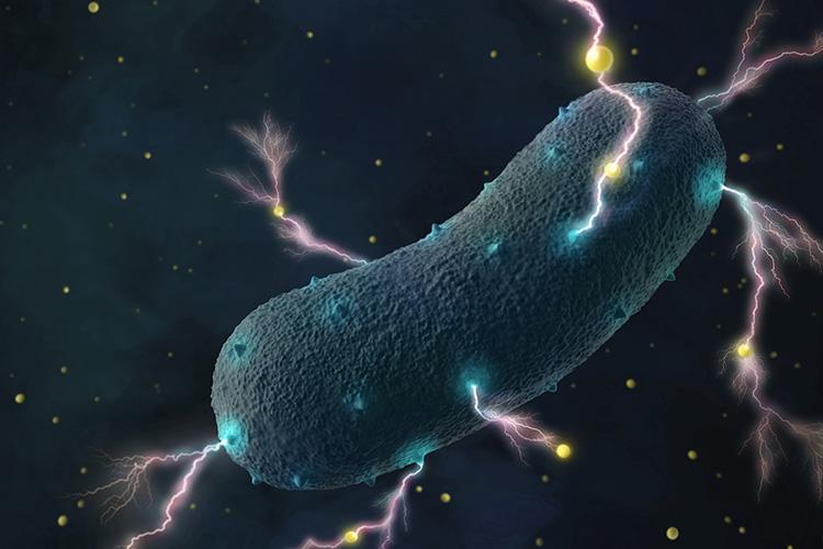 bacteria-crop750