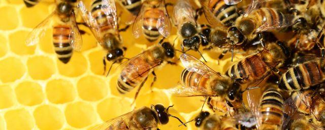 bee-banner-1800x720-x