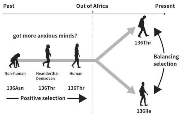 evolution-personality-neurosciencenews