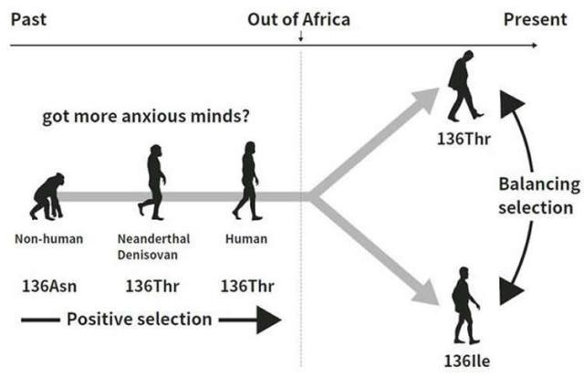 evolution-personality-neurosciencenews